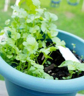 Gardening on Pinterest