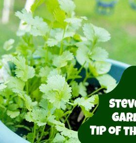 Steven's Gardening Top 10 Essentials
