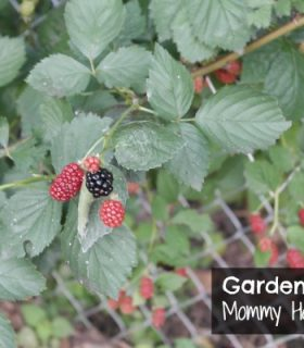Gardening Update & Steven's Tip of the Week