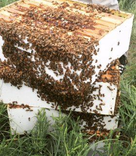 The Story of Honey