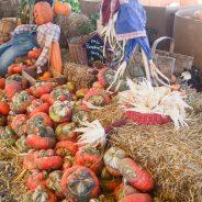 pumpkin-town-23