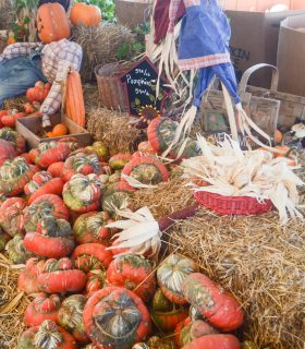 Enjoy Fall at Pumpkin Town Farms
