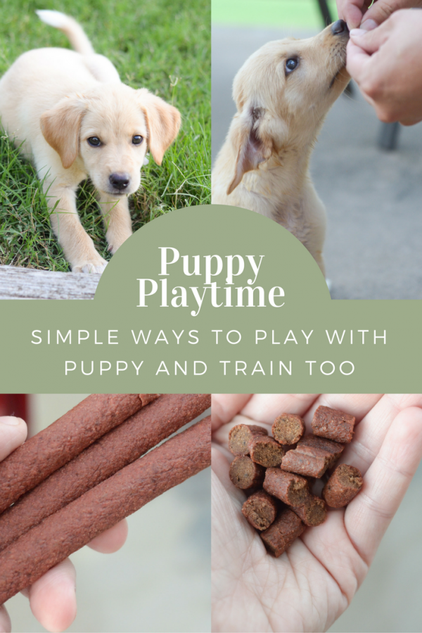 Puppy Platime - Ways to Keep them Engaged