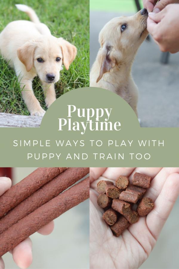 Puppy Platime - Ways to Keep them Engaged