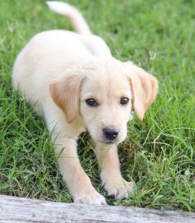 Puppy Playtime – Ways to Keep them Engaged