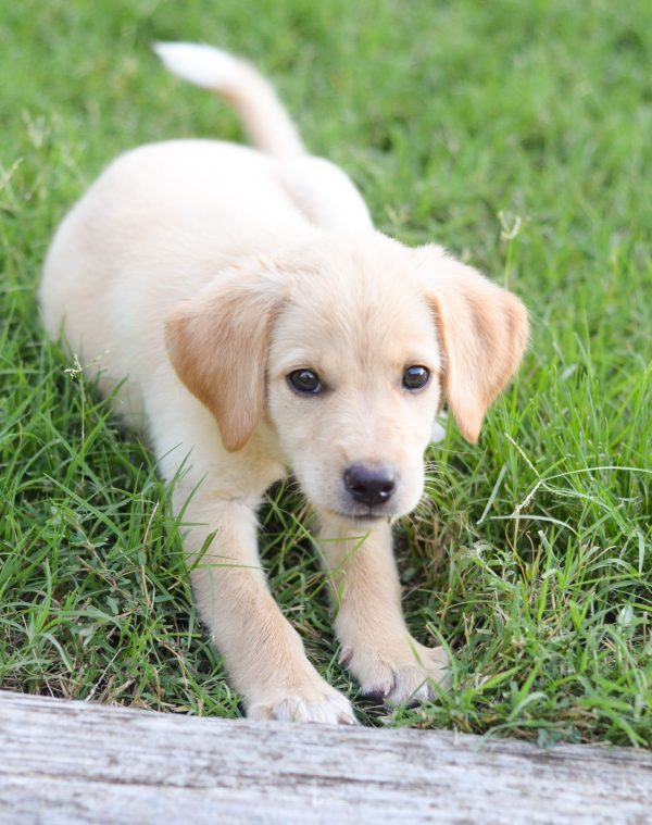 Puppy Playtime - Ways to Keep them Engaged