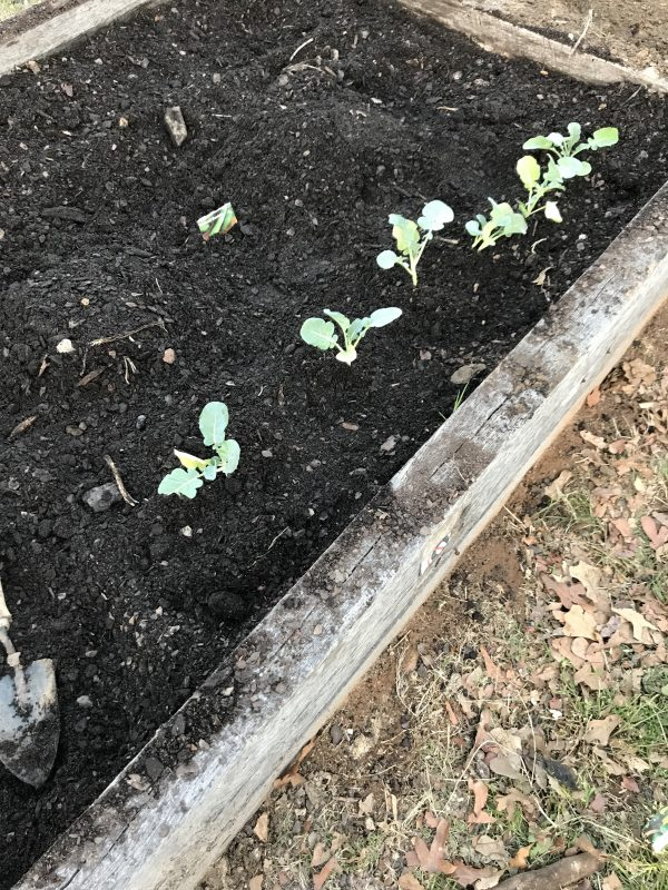 Planting the Garden for 2018