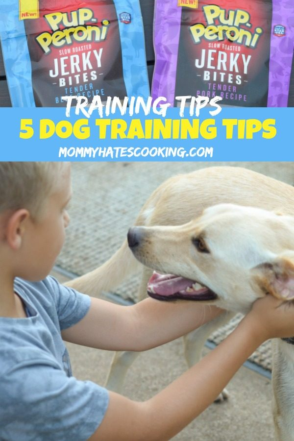 5 Dog Training Tips